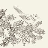 Bird on christmas fir and pinecone. Stock Photo