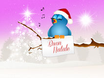 Bird at Christmas Royalty Free Stock Photo