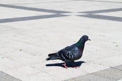 Bird in the city Royalty Free Stock Photo
