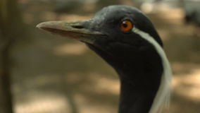 Bird in the city zoo stock video