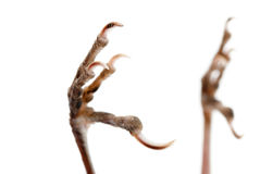 Bird claw isolated Stock Photography