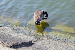 A bird stock image