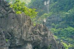 Bird on the cliff Stock Photo