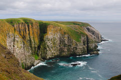 Bird Cliffs in Newfoundland Stock Photo