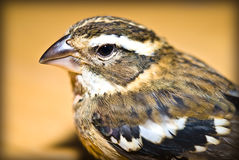 Bird Closeup Royalty Free Stock Photos