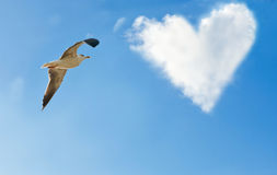 A bird and a cloud in the form of heart Royalty Free Stock Image