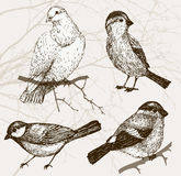 Bird collection. Sparrow, pigeon, bullfinch, titmouse. Set of vintage bird on background with branch Stock Image