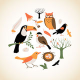 Bird Collection Royalty Free Stock Images