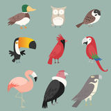 Bird collection. Cartoon species Bird collection. With nine (9) different birds species like: duck, owl, peacock, rooster, pelican, toucan and swan  illustration Royalty Free Stock Images