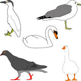 Bird collection (Illustration). Five different type of birds including pigeon, seagull, goose, swan Stock Image