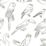 Bird collection pattern Stock Image