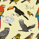 Bird collection pattern Stock Images
