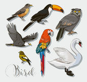 Bird collection set Royalty Free Stock Photography