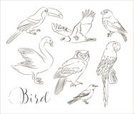 Bird collection set Royalty Free Stock Images