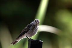 Bird on colomn fence Stock Photo