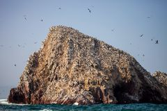 Bird colonies on rocks national park Isla de Ballestas, Peru Royalty Free Stock Photos