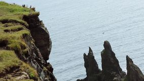 Bird colony on the cliffs, Iceland, a panorama stock footage