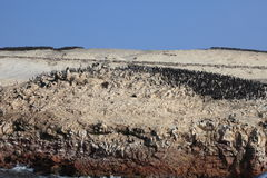 Bird Colony Islas Ballestas Royalty Free Stock Photo