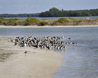 Bird Colony On The Seashore Stock Images