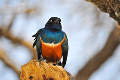 Bird. Colorful bird perched on a branch Royalty Free Stock Photos