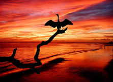 Bird on colorful sunset beach. Scenic view of orange sunset and cloudscape over beach with silhouetted bird on branch in foreground royalty free stock image