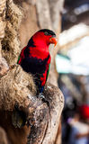 Bird. Colorful of bird at zoo,Thailand Royalty Free Stock Photo
