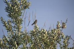 Bird. A common small bird in a urban setting Stock Photography