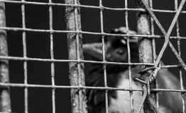 Bird. A confined in a cage, but very desire for freedom of a bird stock images