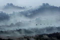 Bird continue fly in the morning forest.  Royalty Free Stock Images