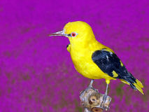 Bird in contrast Royalty Free Stock Image