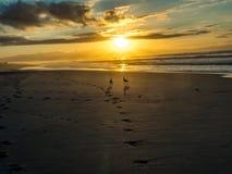 Bird couple on False Bay beach in South Africa. Bird couple at sunrise on False Bay beach in South Africa royalty free stock photos