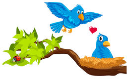 Bird couple in nest. Illustration royalty free illustration
