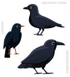 Bird Crow Set Cartoon  Royalty Free Stock Photo