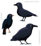 Bird Crow Set Cartoon  Royalty Free Stock Photo
