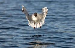 Bird dance Royalty Free Stock Photography