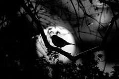 Bird in the dark stock photos