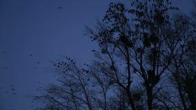 Bird in the dark stock video footage