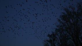 Bird in the dark stock footage