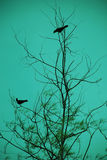 Bird Dating Royalty Free Stock Photography