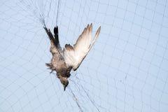 Bird dead Royalty Free Stock Image