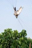 Bird dead. Strangled by the trap from gardener Stock Photo