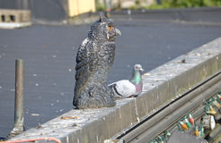Bird Decoy and Pigeon. An owl decoy, placed on top of a building to prevent bird droppings, has attracted a friend stock photo