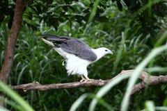 Bird defecating Stock Photo