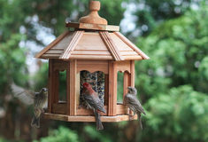 Bird dinner table-finches Stock Photography