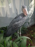 Bird-dinosaur Stock Image