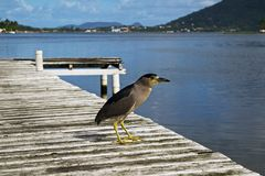 Bird on Dock Royalty Free Stock Images