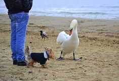 Bird and dog on the beach Royalty Free Stock Image