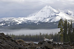 Bird Dog In Mountains. A Llewellin Setter bird dog in the mountains at Sparks Lake, Oregon stock photo
