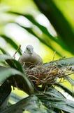 Bird. Doves are breeding in the park Stock Photo