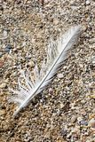 Bird down macro on beach stones background fine art in high quality prints products Canon 5DS - 50,6 Megapixels stock photos